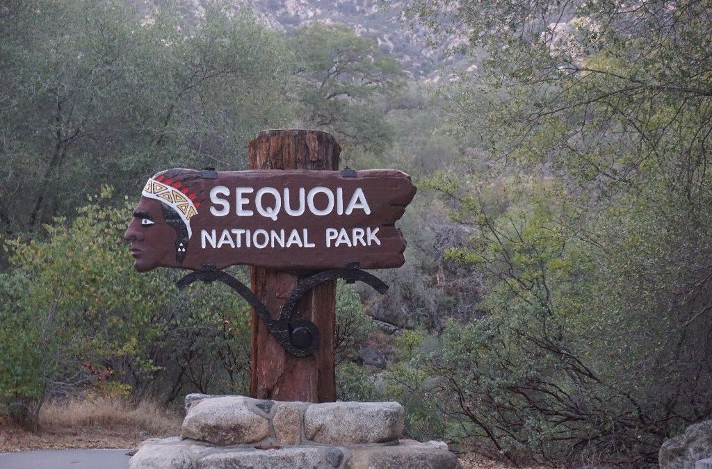 Sequoia National Park svg #5, Download drawings