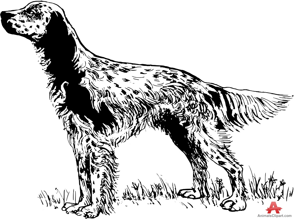 Setter clipart #17, Download drawings