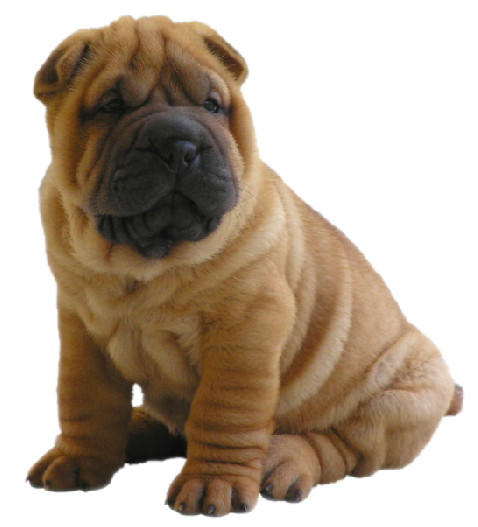 Shar Pei clipart #2, Download drawings