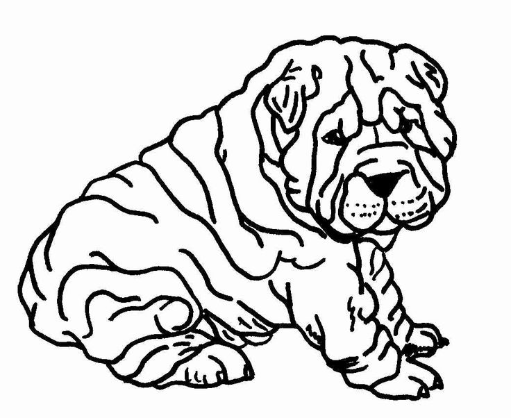 Shar Pei clipart #3, Download drawings