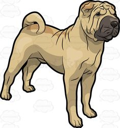 Shar Pei clipart #6, Download drawings