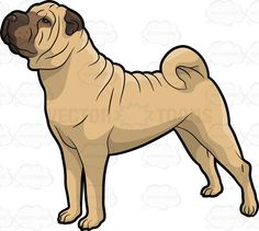 Shar Pei clipart #4, Download drawings