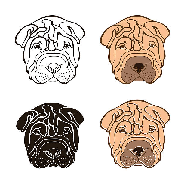 Shar Pei clipart #17, Download drawings