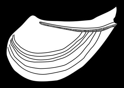 Shar Pei svg #13, Download drawings
