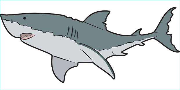 Shark clipart #8, Download drawings