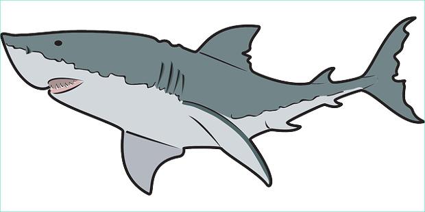 Shark clipart #13, Download drawings