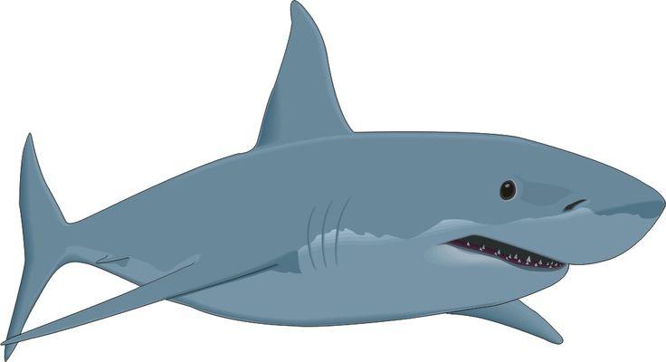 Shark clipart #3, Download drawings