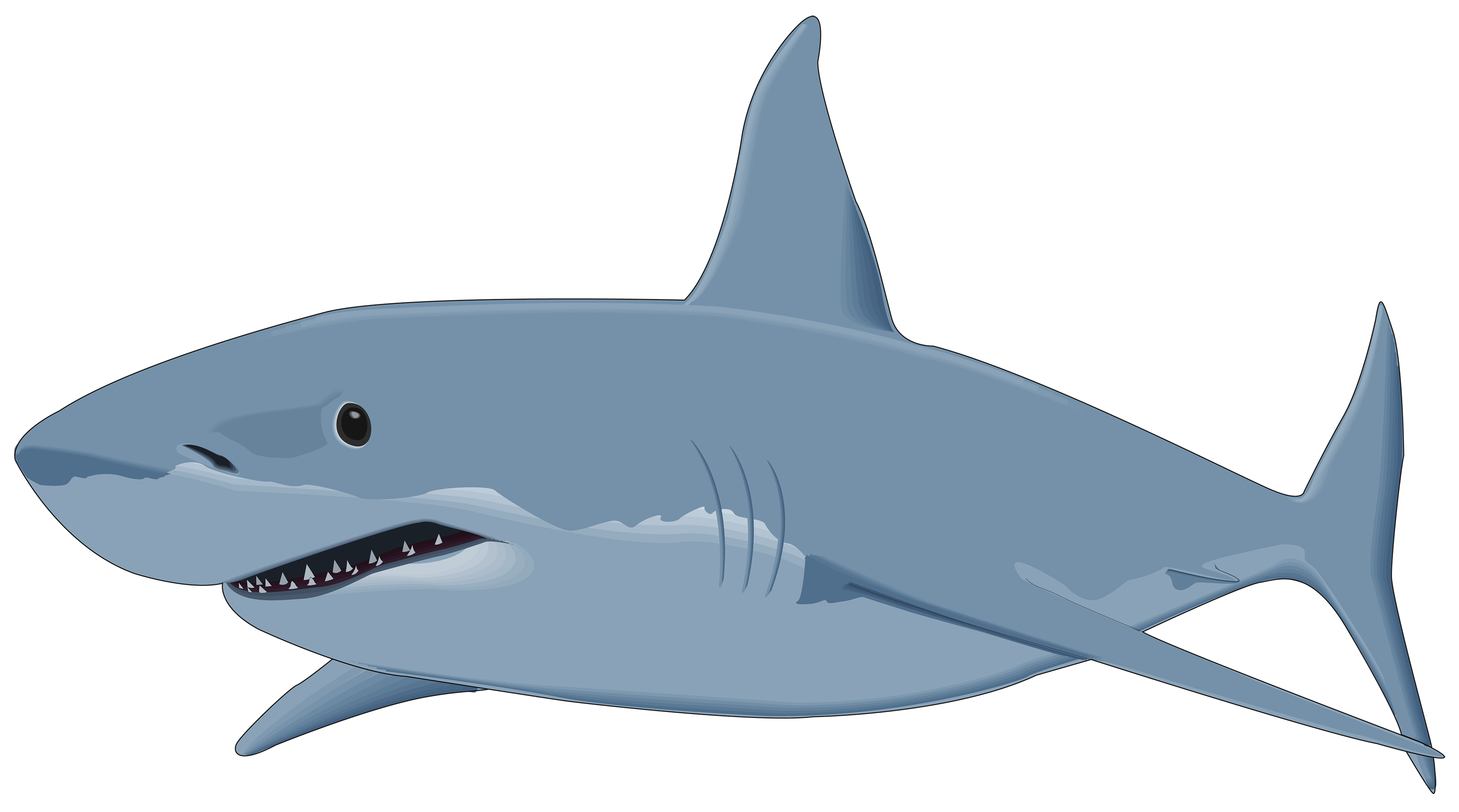 Shark clipart #1, Download drawings