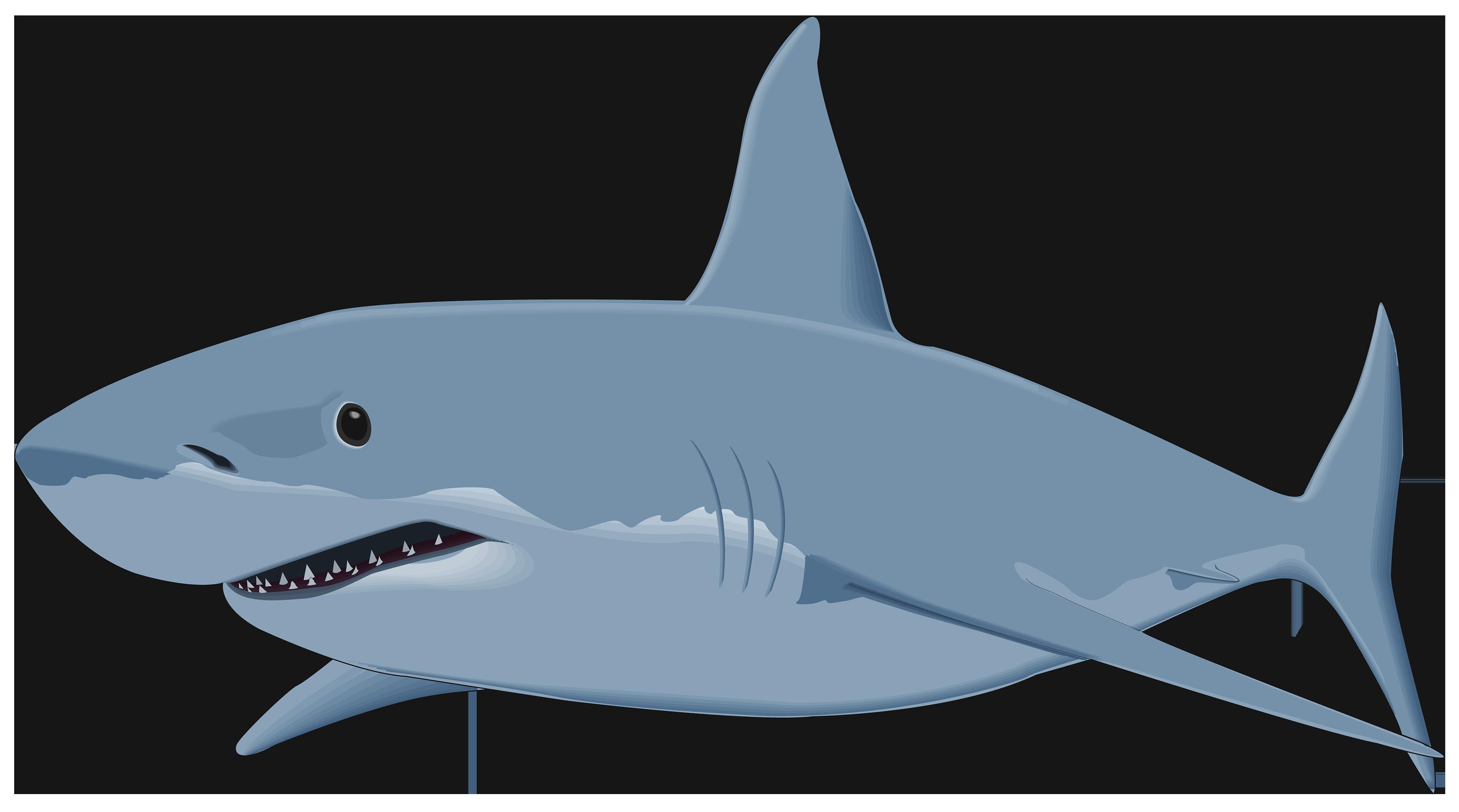 Shark clipart #20, Download drawings
