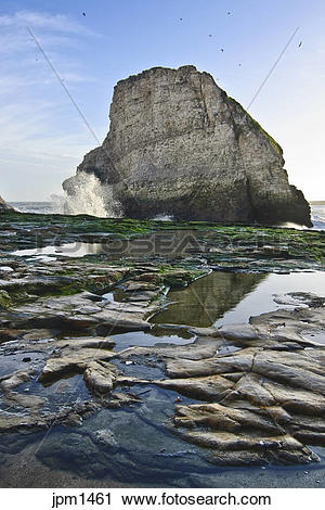 Shark Fin Cove clipart #14, Download drawings
