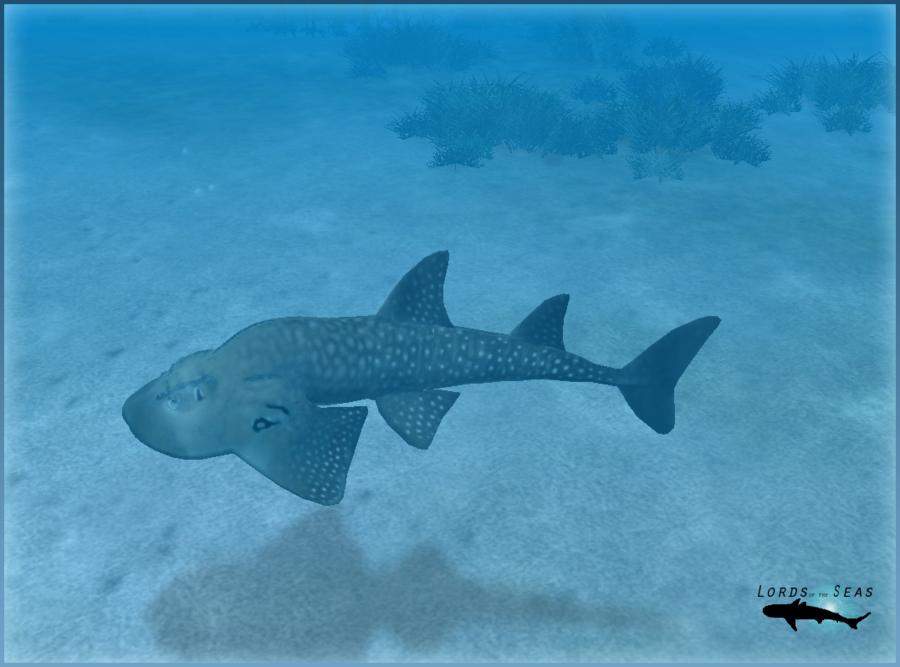Shark Fin Guitarfish clipart #5, Download drawings