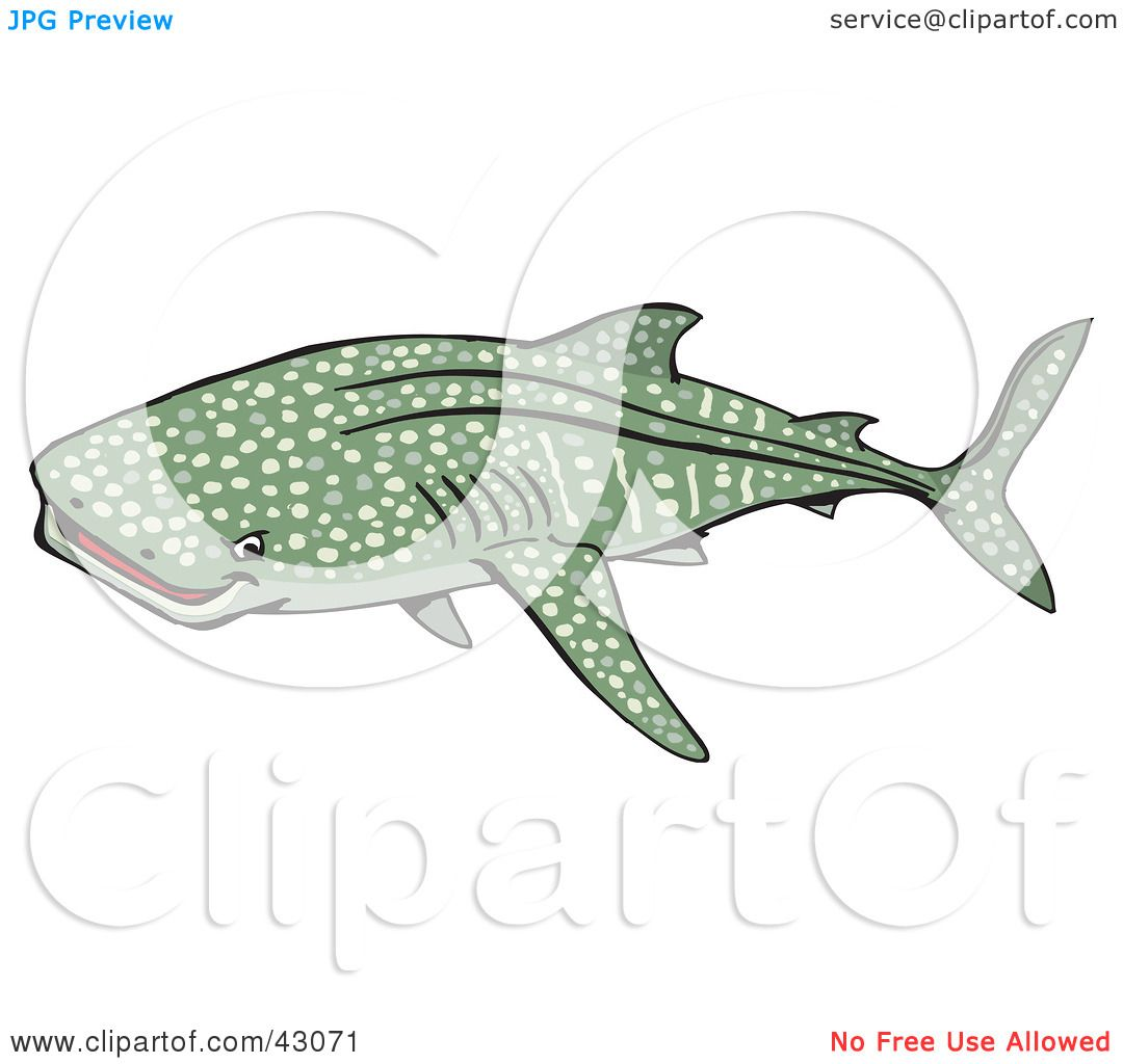 Sharkwhale clipart #14, Download drawings