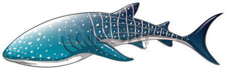 Whale Shark clipart #16, Download drawings