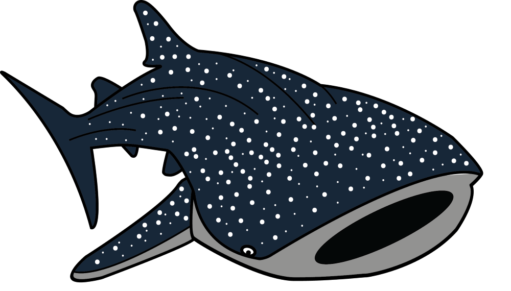 Sharkwhale clipart #4, Download drawings