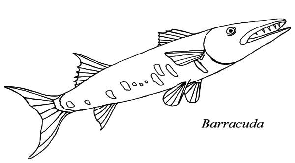 Barracuda coloring #20, Download drawings