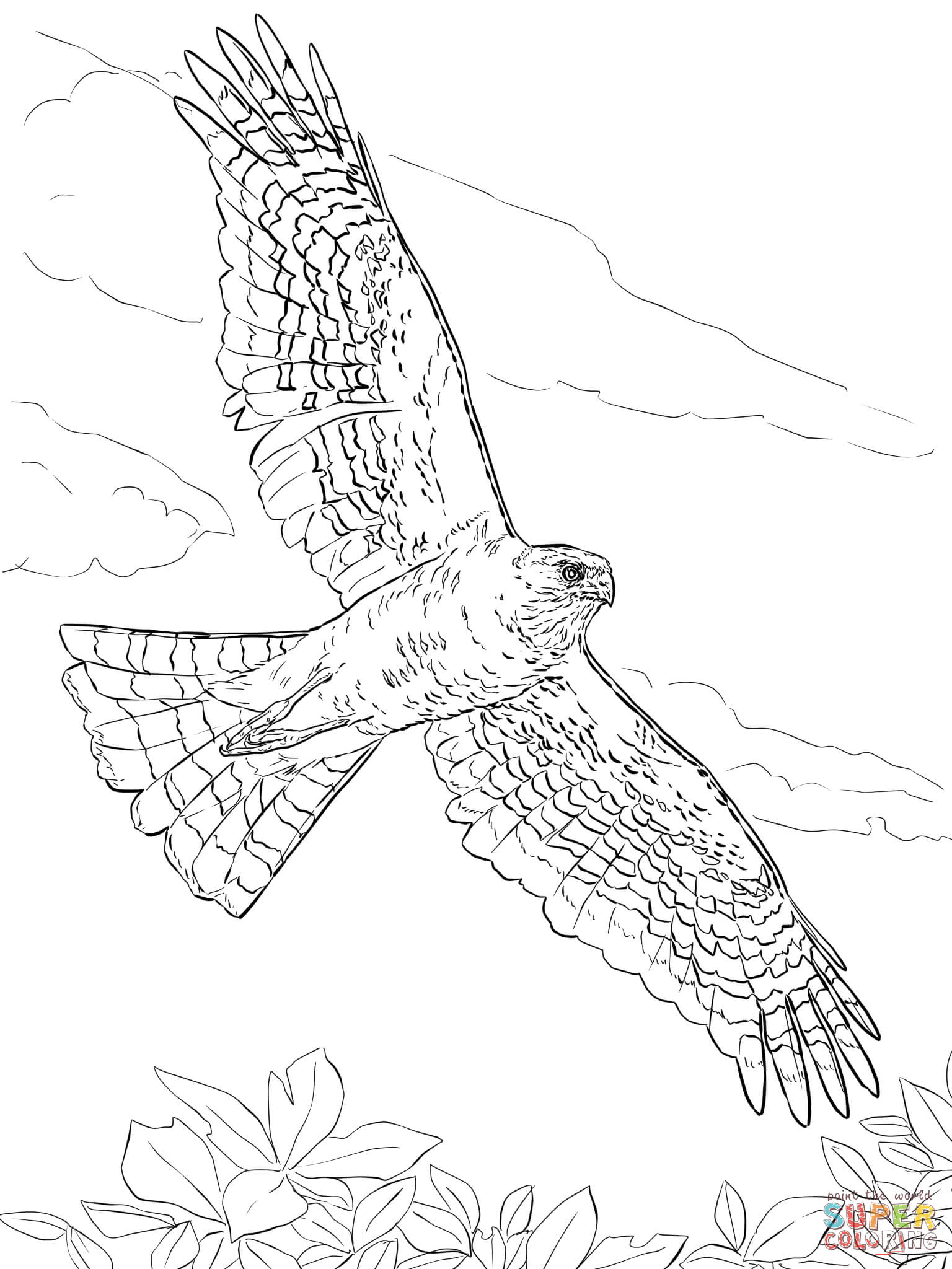 Red-tailed Hawk coloring #8, Download drawings