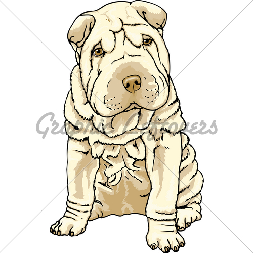 Sharpei clipart #1, Download drawings