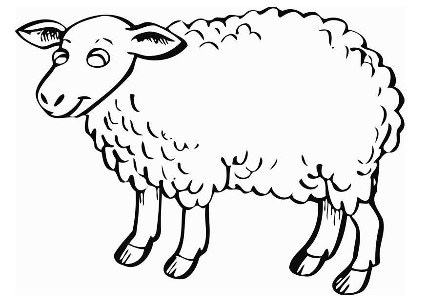 Sheep coloring #13, Download drawings