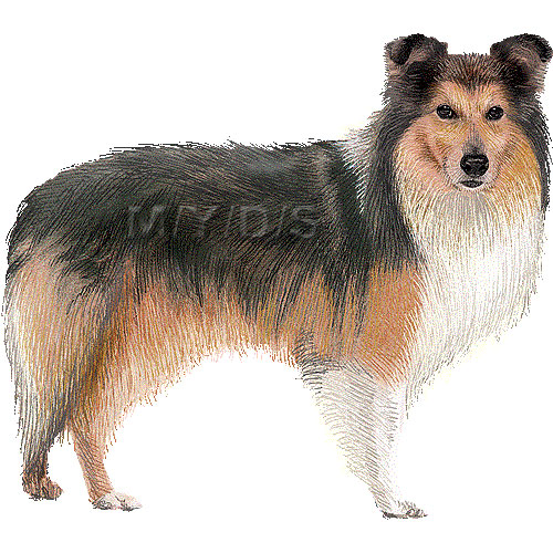 Sheepdog clipart #4, Download drawings