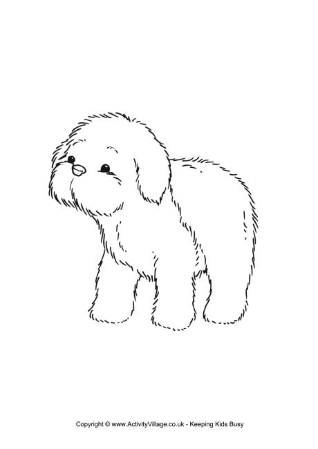 Download Sheepdog coloring for free - Designlooter 2020