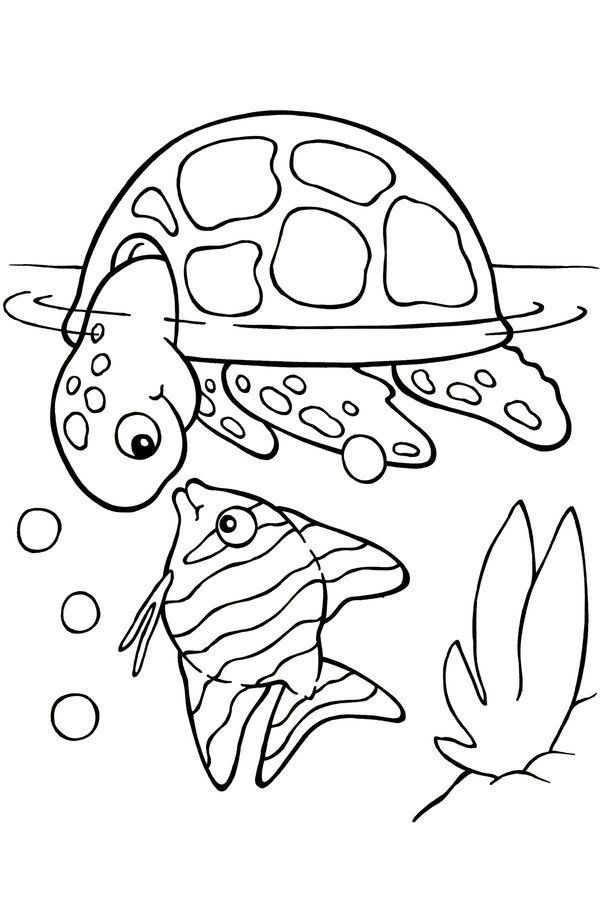 Turtle Monk coloring #19, Download drawings