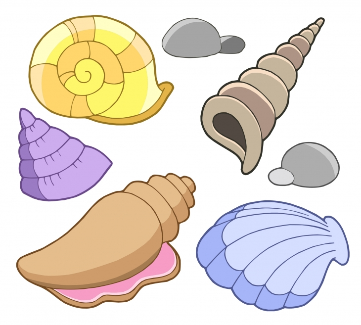Shell clipart #3, Download drawings