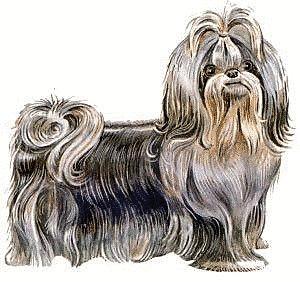 Shih Tzu clipart #14, Download drawings