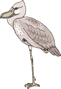 Shoebill clipart #20, Download drawings
