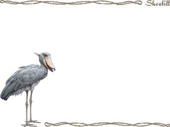 Shoebill clipart #16, Download drawings