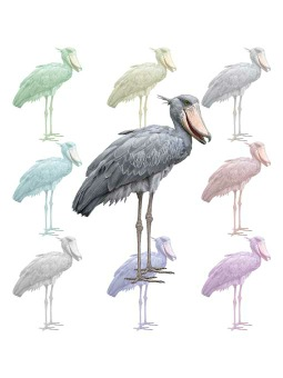 Shoebill clipart #9, Download drawings