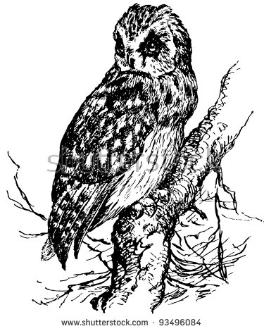 Short-eared Owl clipart #6, Download drawings