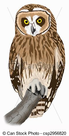 Short-eared Owl clipart #4, Download drawings