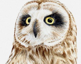 Short-eared Owl clipart #12, Download drawings