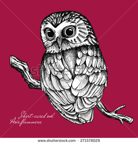 Short-eared Owl clipart #18, Download drawings