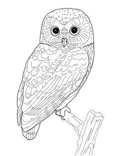 Short-eared Owl coloring #14, Download drawings