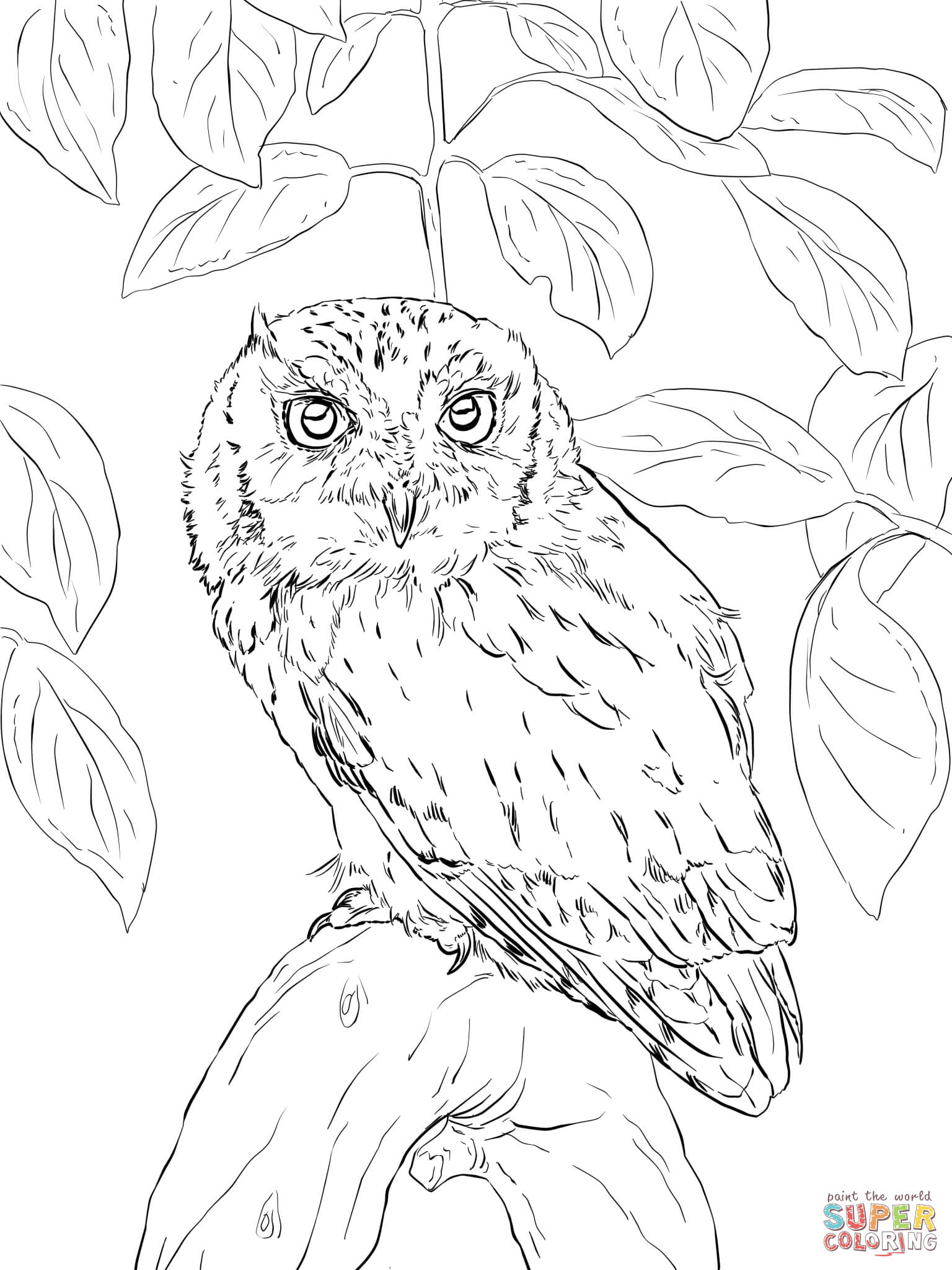 Short-eared Owl coloring, Download Short-eared Owl ...