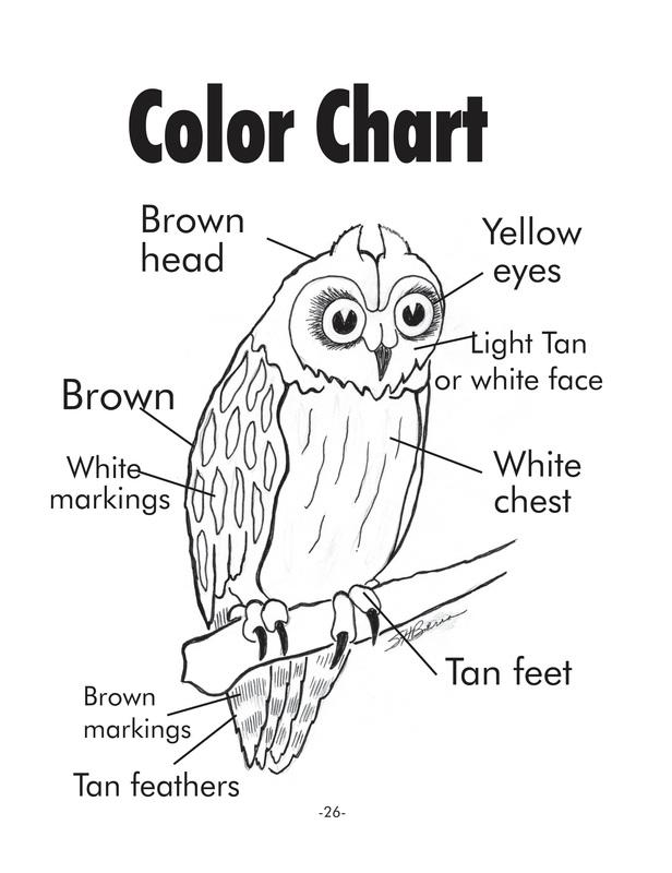Short-eared Owl coloring #1, Download drawings