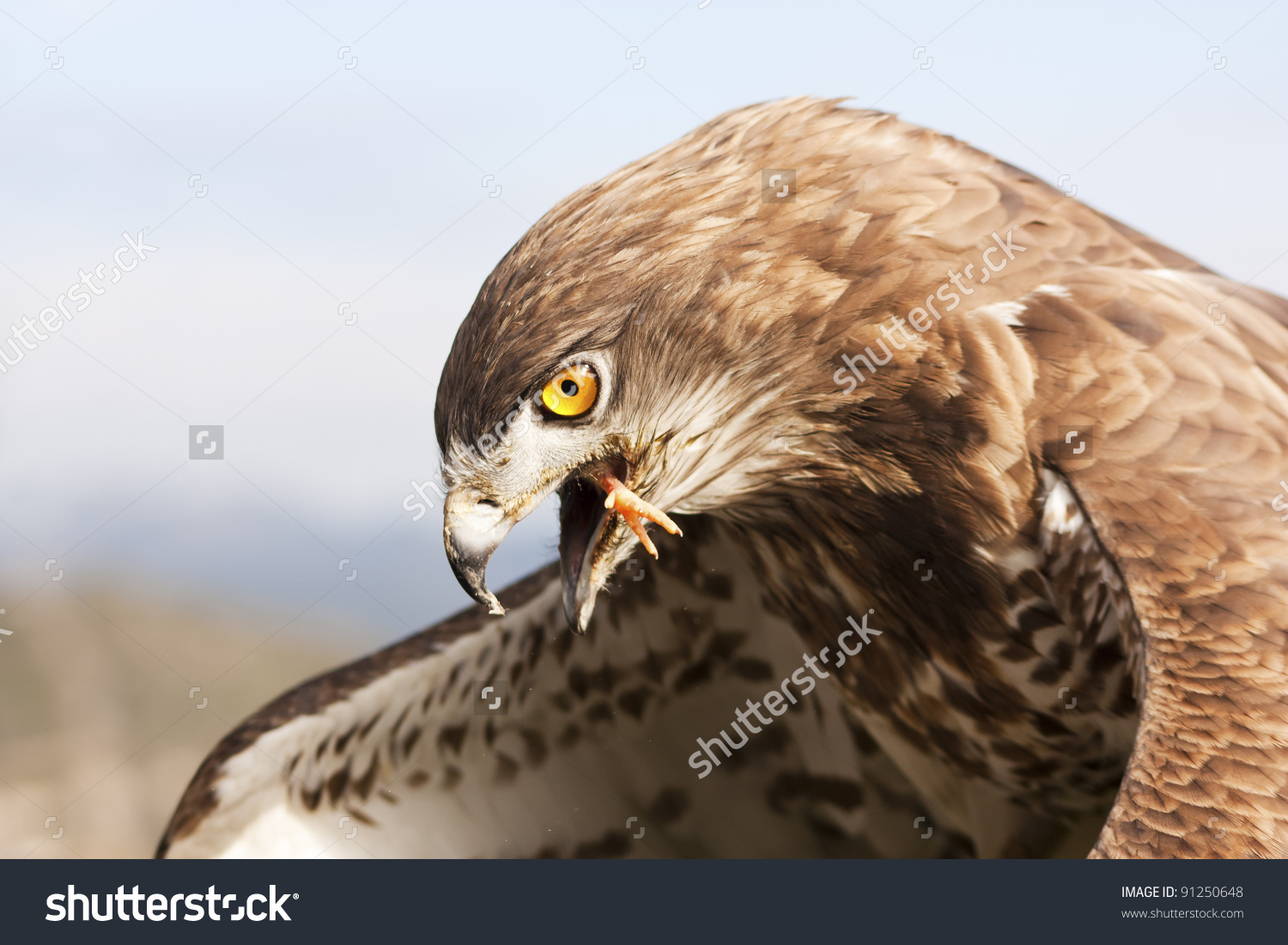Short-toed Snake Eagle clipart #19, Download drawings