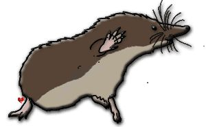 Shrew clipart #1, Download drawings