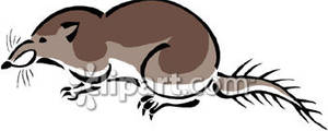 Shrew clipart #10, Download drawings