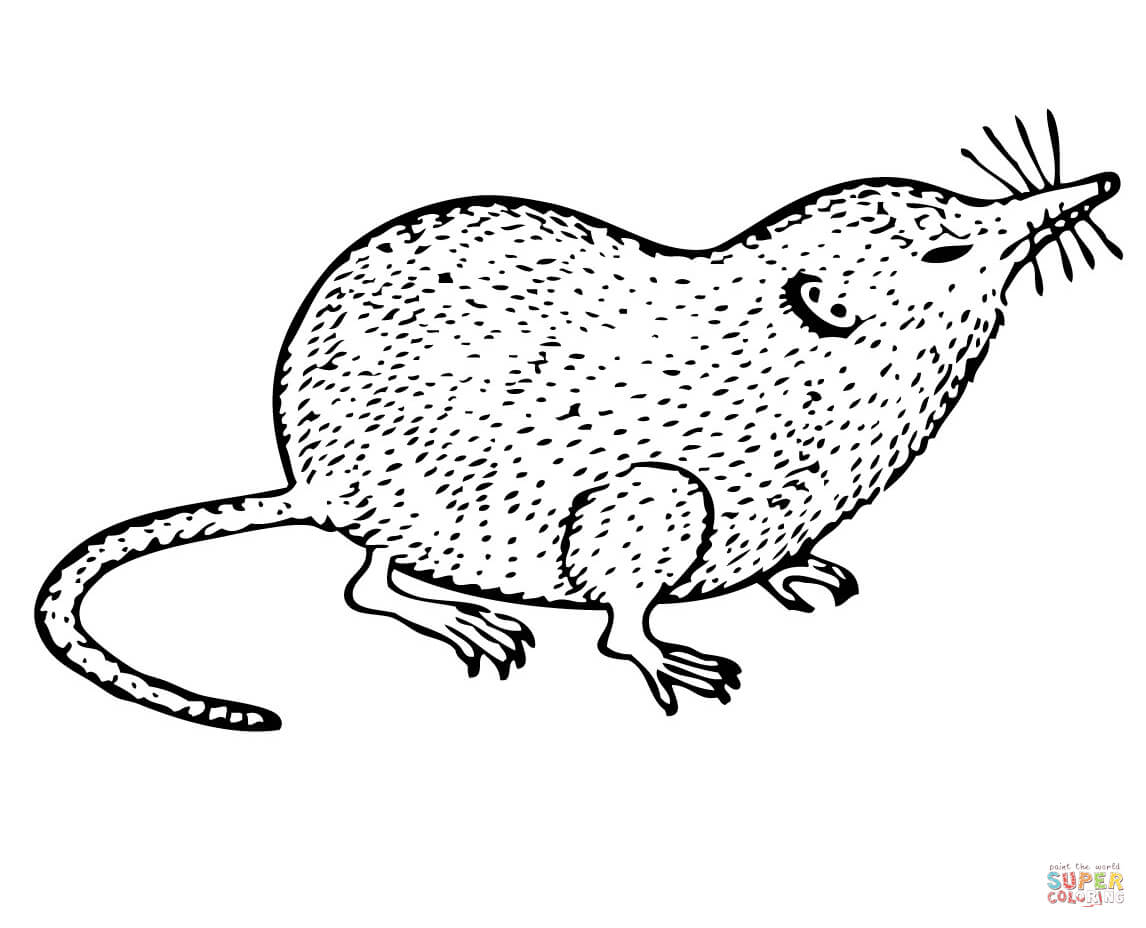 Shrew clipart #4, Download drawings