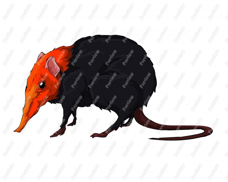 Shrew clipart #5, Download drawings