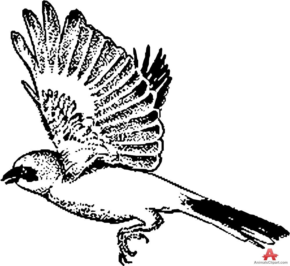 Shrike clipart #16, Download drawings