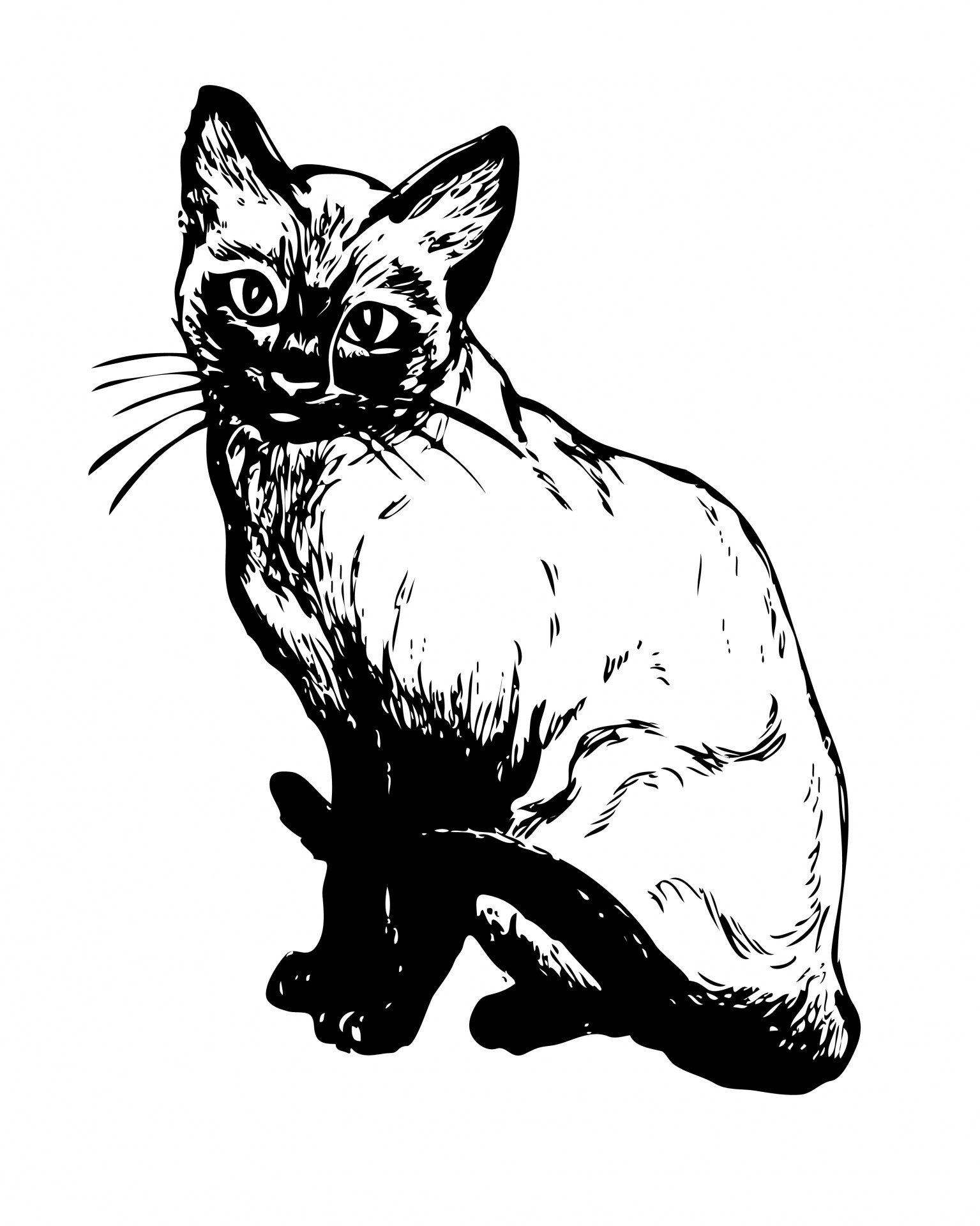 Siamese Cat clipart #20, Download drawings