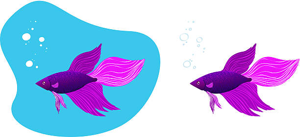 Siamese Fighting Fish clipart #10, Download drawings