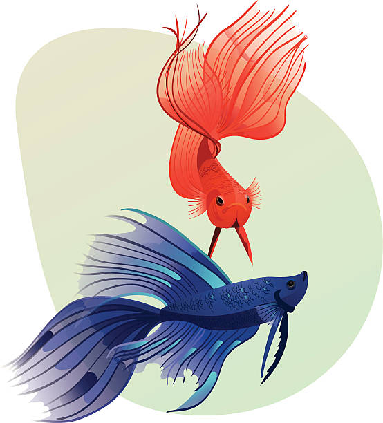 Siamese Fighting Fish clipart #15, Download drawings