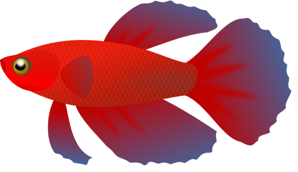 Siamese Fighting Fish clipart #13, Download drawings