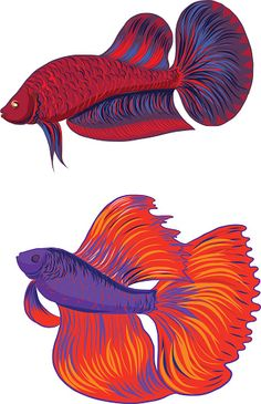 Siamese Fighting Fish clipart #6, Download drawings