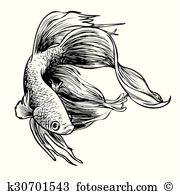 Siamese Fighting Fish clipart #4, Download drawings