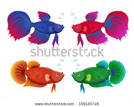 Siamese Fighting Fish clipart #9, Download drawings